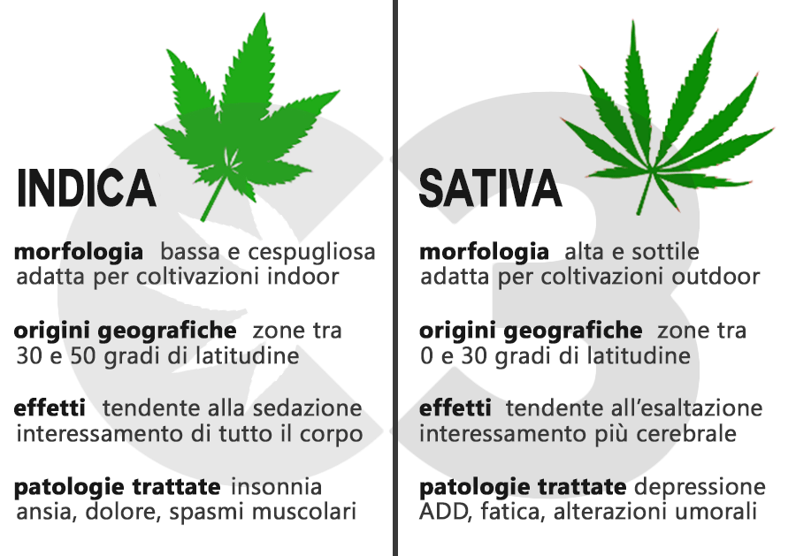 differenze generali indica sativa